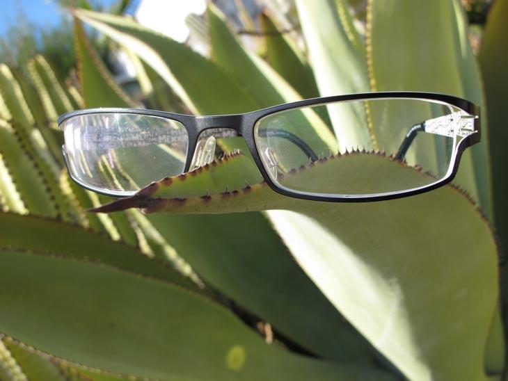 brillife_kaktus